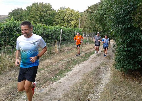 Läufer-Gruppe in den Freyburger Weinbergen
