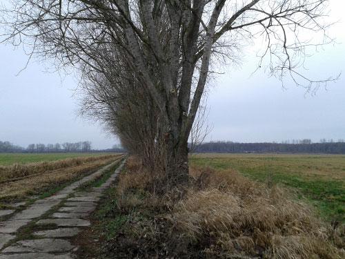 Plattenweg in der Diedersdorfer Heide mit Blick auf Bahnunterführung