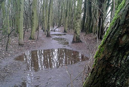 Matschiger Waldpfad mit Pfützen