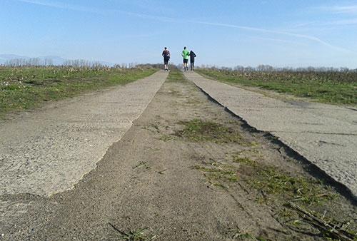 Plattenweg zwischen Feldern