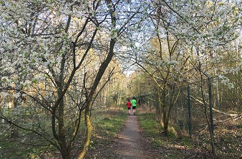 Blühende Bäume am rande der Parks Range