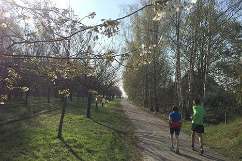 Läufer auf dem Berliner Mauerweg, Kirschblüten-Allee