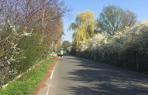 Frühling: Blühende Bäume am Diedersdorfer Weg