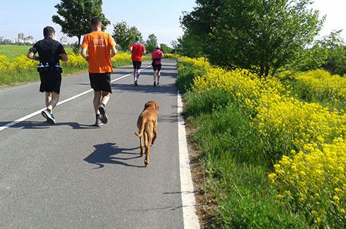 Läuferin und Läufer auf der alten B101 Richtung Berlin