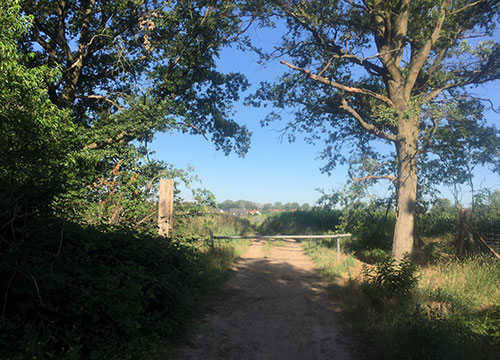 Waldweg bei Kleinbeeren