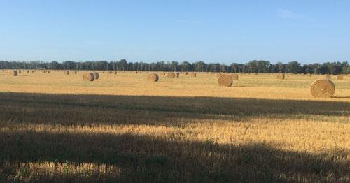 Feld mit vielen runden Strohballen