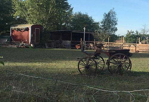 Alte Kutsche auf Weide
