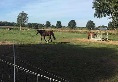 Pferde auf Koppel