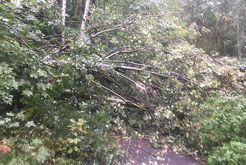 Umgestürzter Baum auf dem Weg