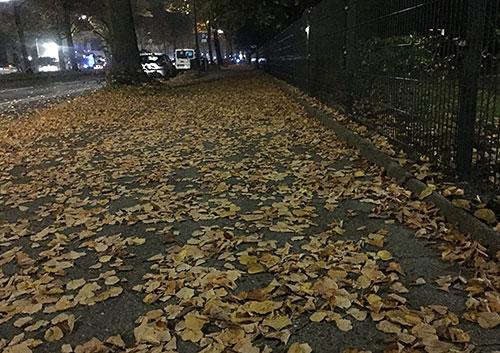 Herbstlaub auf dem Fußweg