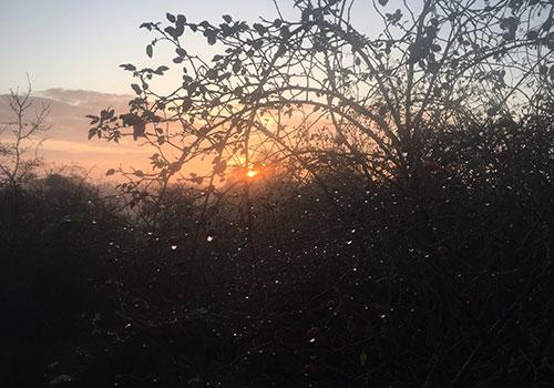 Sonne scheint durch ein Gebüsch mit vielen Regentropfen an den Zweigen