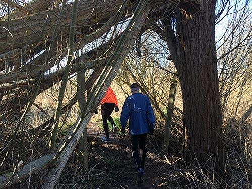 Läufer unter umgestürzten Baum