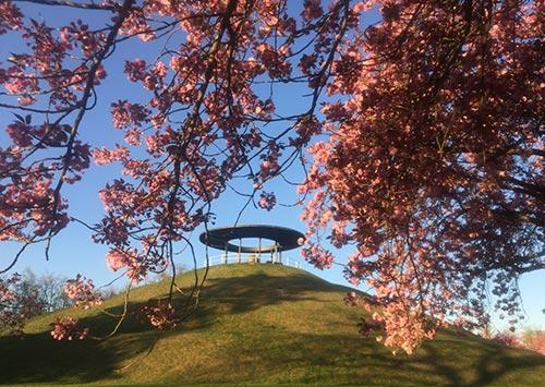 Lilienthal-Gedenkstätte auf dem Fliegeberg mit blühenden Kirschbäumen