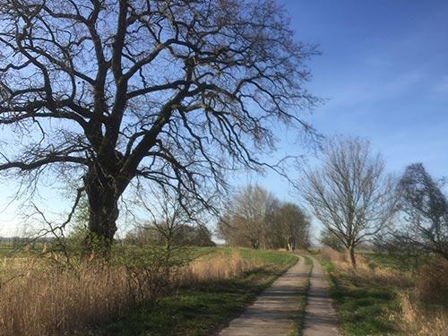 Plattenweg durch die Diedersdorfer Heide