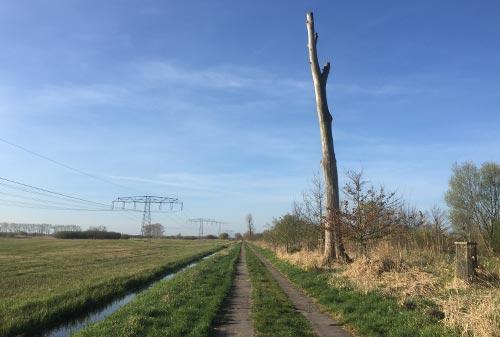 Kahler hoher Baumstamm am Wegesrand