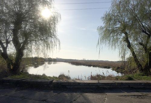 Der Schwanensee im Gegenlicht
