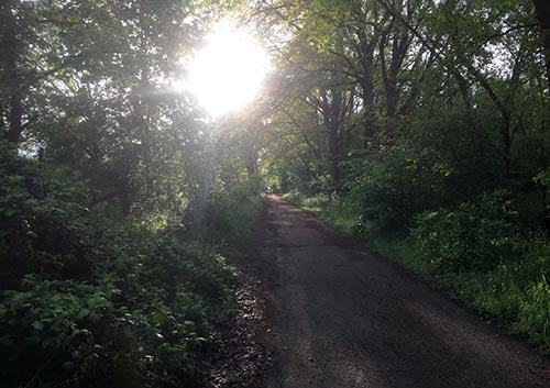 Parkweg mit Sonne im Gegenlicht