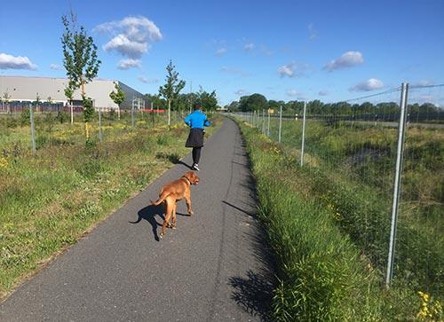 Läufer mit Hund an der L76