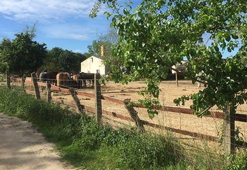 Pferde am Grünen Weg