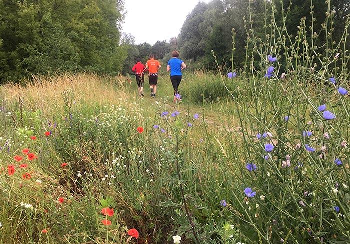Feldblumen und Läufer
