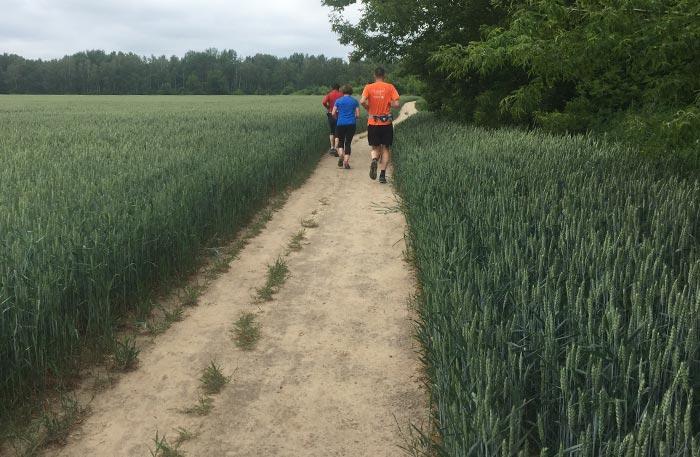 Läufergruppe auf Weg an einem großen Feld entlang