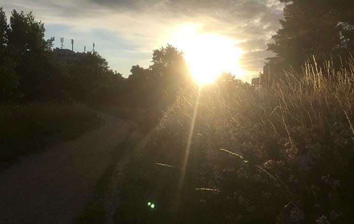 Parkweg im Gegenlicht der Morgensonne