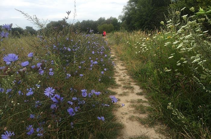 Feldblumen im Vordergrund, Läufer im Hintergrund