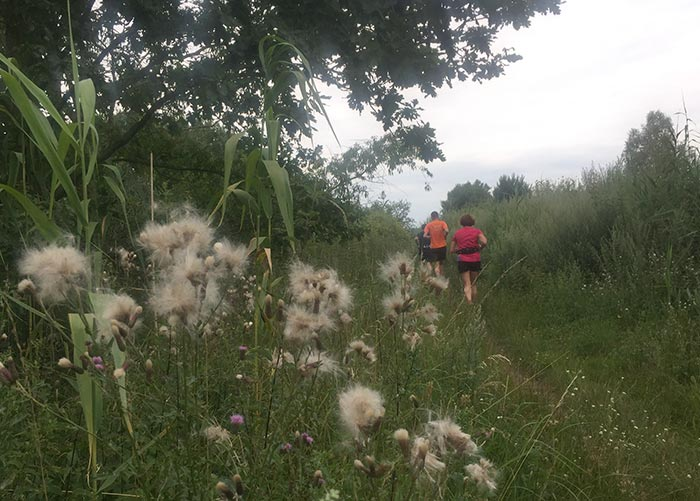 Läufergruppe auf schmalem zugewachsenen Pfad