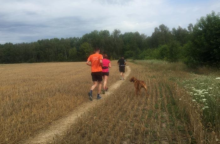 Läuferin und Läufer mit Hund auf Feldweg