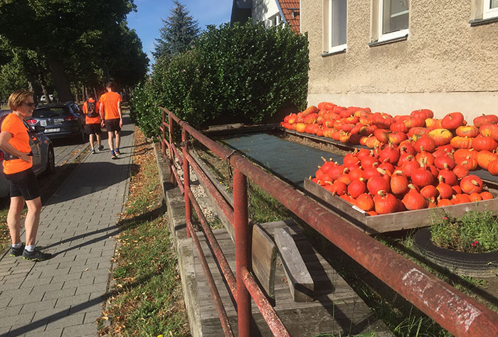 Läufer in orangen Shirts und orange Kürbisse am Straßenrand
