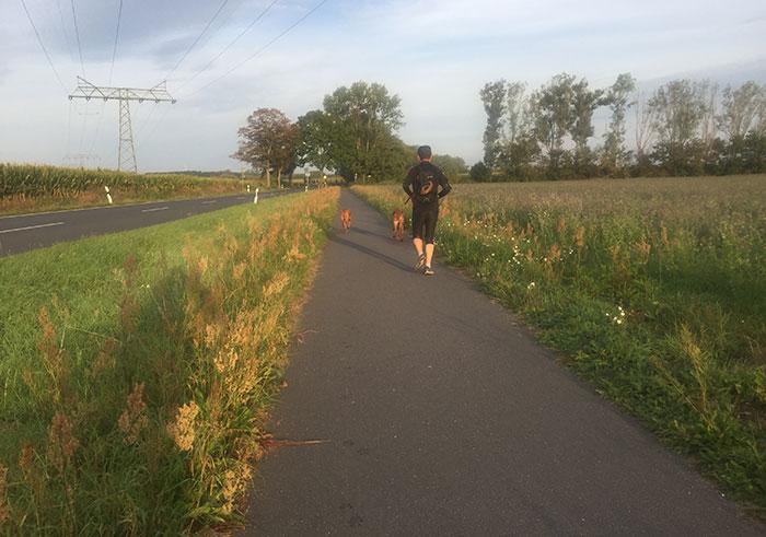 Läufer auf dem Asphalt-Fußweg Richtung Großbeeren