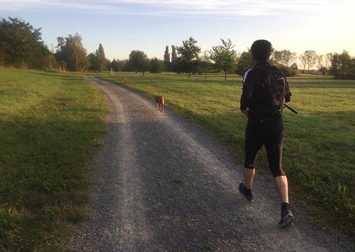 Läufer mit Hunden auf einem Parkweg