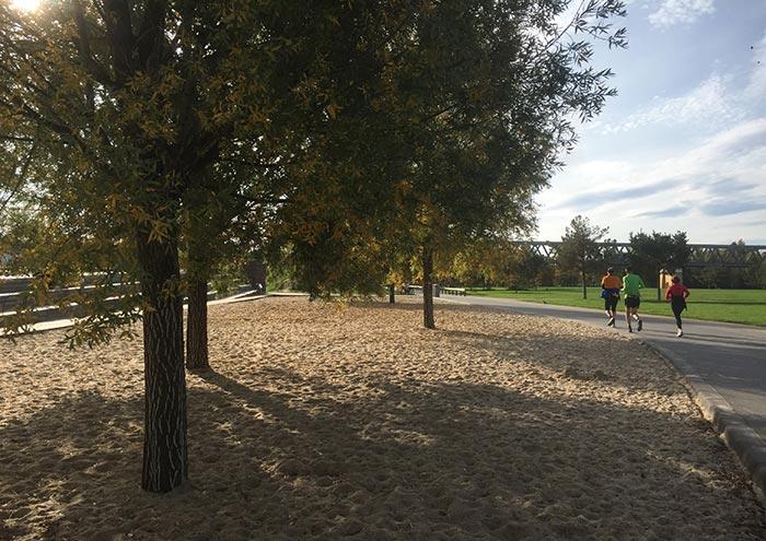 Sandkiste mit Kiefern, Läufer