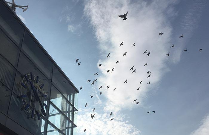Bahnhofsuhr und Vogelschwarm