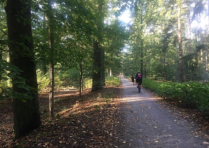 Läufer und Radbegleiter auf dem Königsweg, Sonne scheint durch die Bäume