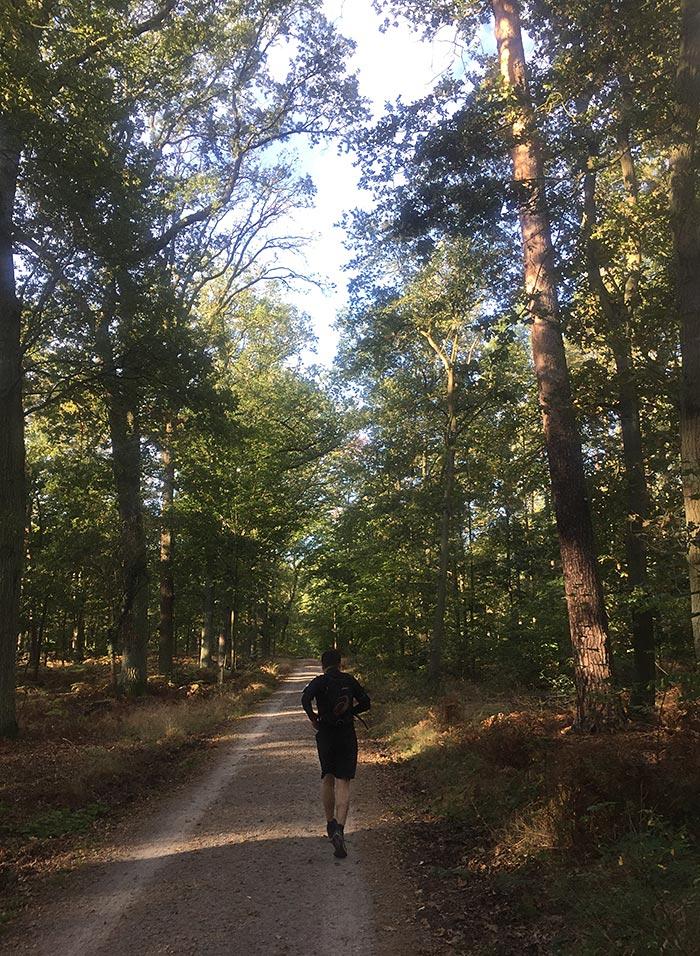 Läufer auf Waldweg zwischen hohen Bäumen