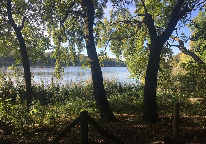 Blick zwischen Uferbäumen auf den Griebnitzsee