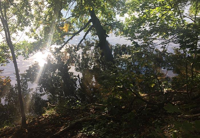 Sonne glitzert im Wasser zwischen spiegelnden Bäumen am Ufer
