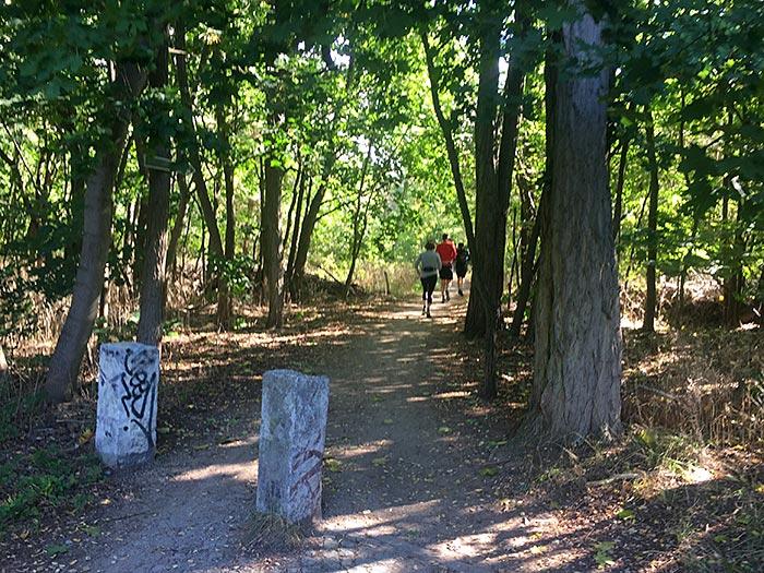 Eingang zu einem Waldweg, vorne zwei Steinpfeiler, im Hintergrund Läufer