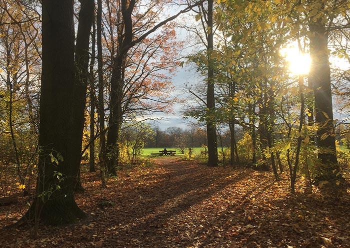 Herbstlaub, Sonne scheint durch die Bäume, im Hintergrund Mann auf Bank