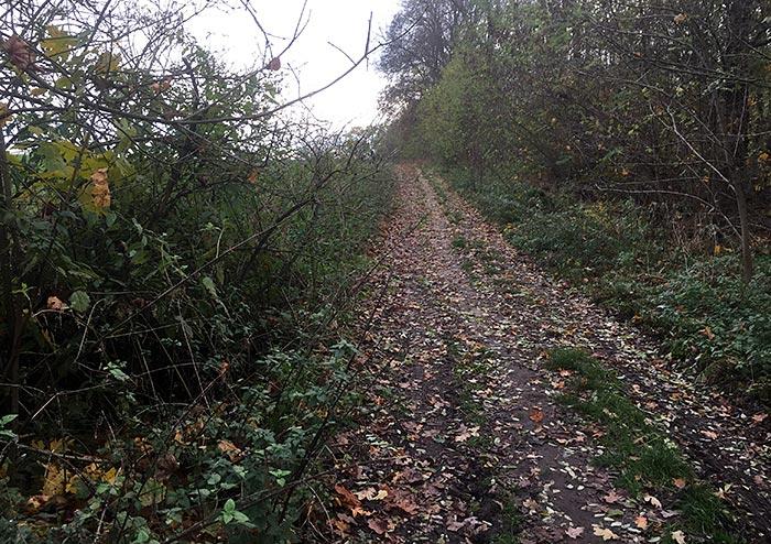 Plattenweg am Feldrand, mit Herbstlaub bedeckt