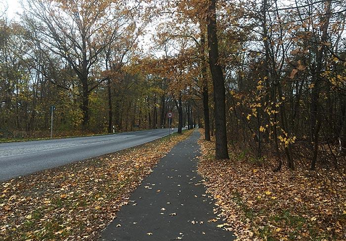 Asphalt-Radweg nach Großbeeren mit Herbstlaub