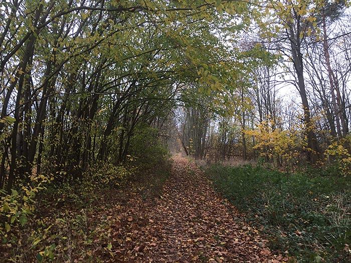 Völlig von Herbstlaub bedeckter Plattenweg