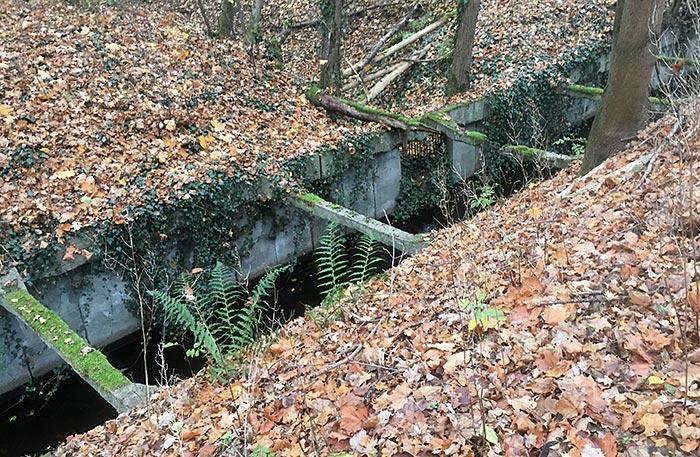Betonierte Einfassung des Mahlower Seegrabens, ringsum Herbstlaub