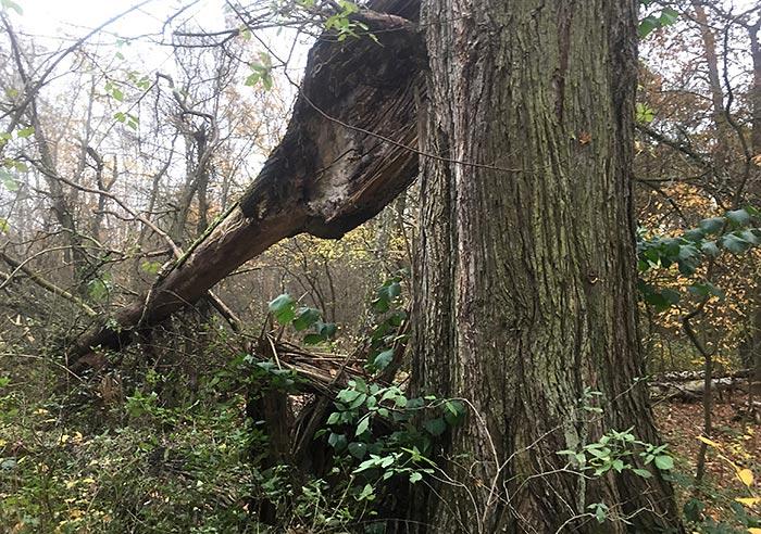 Abgebrochener Teil eines Baums