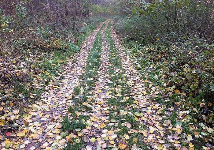 Waldpfad mit drei Spuren, von Herbstlaub bedeckt
