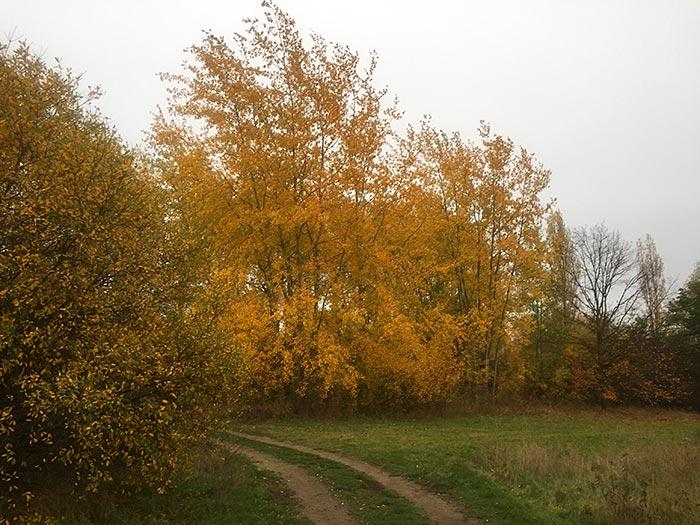 Herbstlich gelb leuchtende Baumgruppe