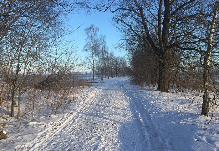 Schneebedeckter Weg zwischen Feldern und Bäumen