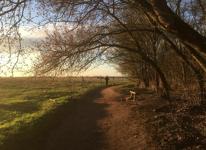 Läufer auf Pfad am Wiesenrand