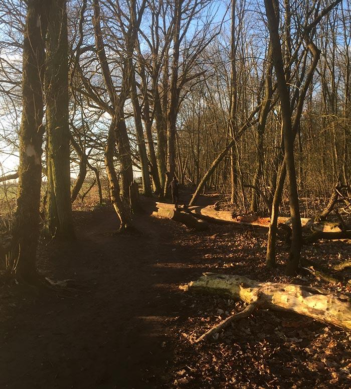 Läufer zwischen kahlen Bäumen im Sonnenlicht